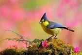 花鳥集:20140407-15.jpg