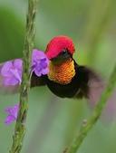 花鳥集:20140801-1.jpg