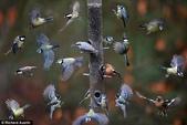 花鳥集:20140410-11.jpg