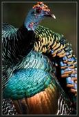 花鳥集:20140410-12.jpg