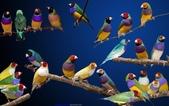 花鳥集:20140520-1.jpg