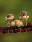 花鳥集:20140402-30.jpg