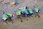 花鳥集:20140801-16.jpg