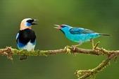 花鳥集:20140407-16.jpg