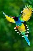花鳥集:仙鳥38.jpg