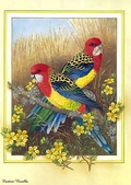花鳥集:177254618_m.jpg