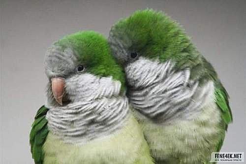 花鳥集:甜蜜鳥兒21.jpg