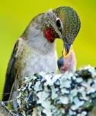 花鳥集:20140520-3.jpg