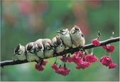 花鳥集:20140410-15.jpg
