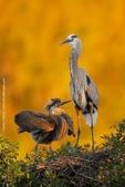 花鳥集:20140520-4.jpg