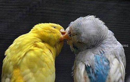 花鳥集:甜蜜鳥兒22.jpg