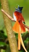 花鳥集:20140520-7.jpg