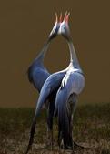 花鳥集:20140520-8.jpg