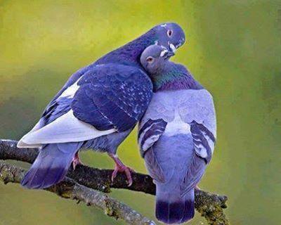 花鳥集:甜蜜鳥兒11.jpg