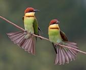 花鳥集:20140407-19.jpg