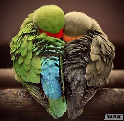 花鳥集:甜蜜鳥兒26.jpg