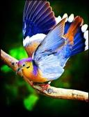 花鳥集:仙鳥41.jpg