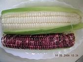 98年11月蕭堯博士「逍遙自在.健康養生營」 (陳靜芳拍攝):玉米  營養豐富  秋收冬藏之妙食