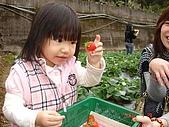 大湖採草莓&豆腐街吃午餐:DSC04254.JPG