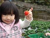 大湖採草莓&豆腐街吃午餐:DSC04255.JPG