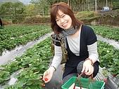 大湖採草莓&豆腐街吃午餐:DSC04228.JPG
