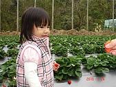 大湖採草莓&豆腐街吃午餐:DSC04232.JPG