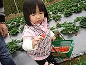大湖採草莓&豆腐街吃午餐:DSC04260.JPG