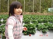大湖採草莓&豆腐街吃午餐:DSC04233.JPG