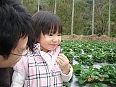 大湖採草莓&豆腐街吃午餐:DSC04236.JPG