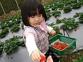 大湖採草莓&豆腐街吃午餐:DSC04262.JPG