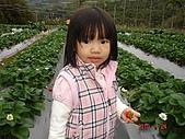 大湖採草莓&豆腐街吃午餐:DSC04242.JPG