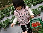 大湖採草莓&豆腐街吃午餐:DSC04263.JPG