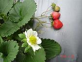 大湖採草莓&豆腐街吃午餐:DSC04225.JPG