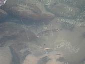 獅公髻尾山:IMG_8162.jpg