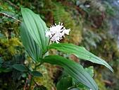 太平山四月植物篇:IMG_2866.jpg
