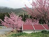 春之花海-武陵賞櫻(2):IMG_2995.jpg