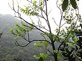 猴硐鐘萼木:IMG_3394.jpg