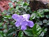 太平山四月植物篇:IMG_2889.jpg