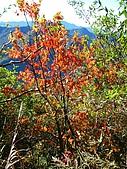 奇萊南峰、南華山:IMG_9969.jpg
