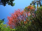奇萊南峰、南華山:IMG_9971.jpg