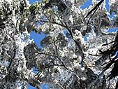 雪蓋復興尖、冰封塔曼山:IMG_2538.jpg