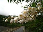 三星山、太平山森林遊樂區:IMG_2569.jpg