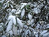 雪蓋復興尖、冰封塔曼山:IMG_2555.jpg