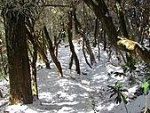 雪蓋復興尖、冰封塔曼山:IMG_2492.jpg