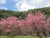 春之花海-武陵賞櫻(2):IMG_2914.jpg
