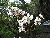 植物隨拍:IMG_3401.jpg