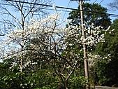 佛山賞李花:IMG_6443.jpg