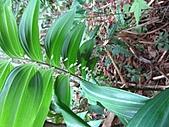 植物隨拍:IMG_3424.jpg
