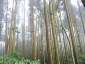 新竹五峰郷大窩山、鳥嘴山:IMG_7764.jpg