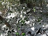 雪蓋復興尖、冰封塔曼山:IMG_2471.jpg